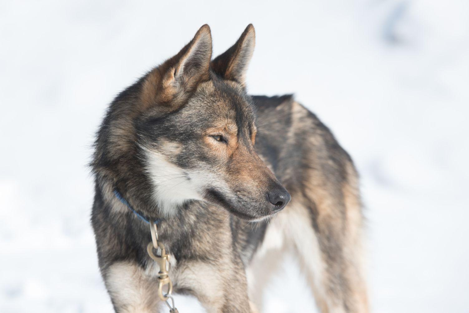 RR-Hunde-TT-2019_001