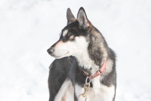RR-Hunde-TT-2019_004-i