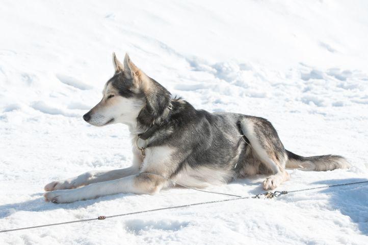 RR-Hunde-TT-2019_013-i