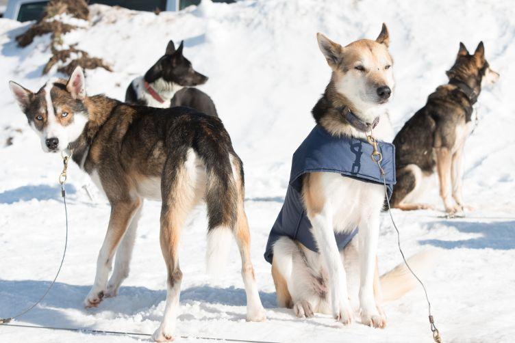 RR-Hunde-TT-2019_020