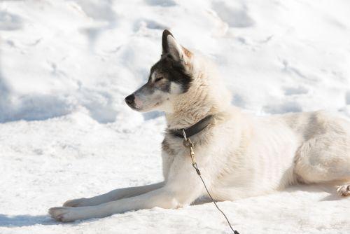 RR-Hunde-TT-2019_026-i