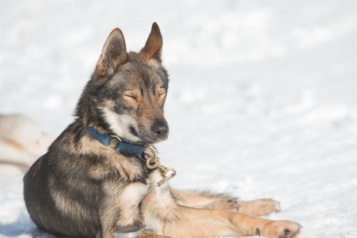 RR-Hunde-TT-2019_056-i